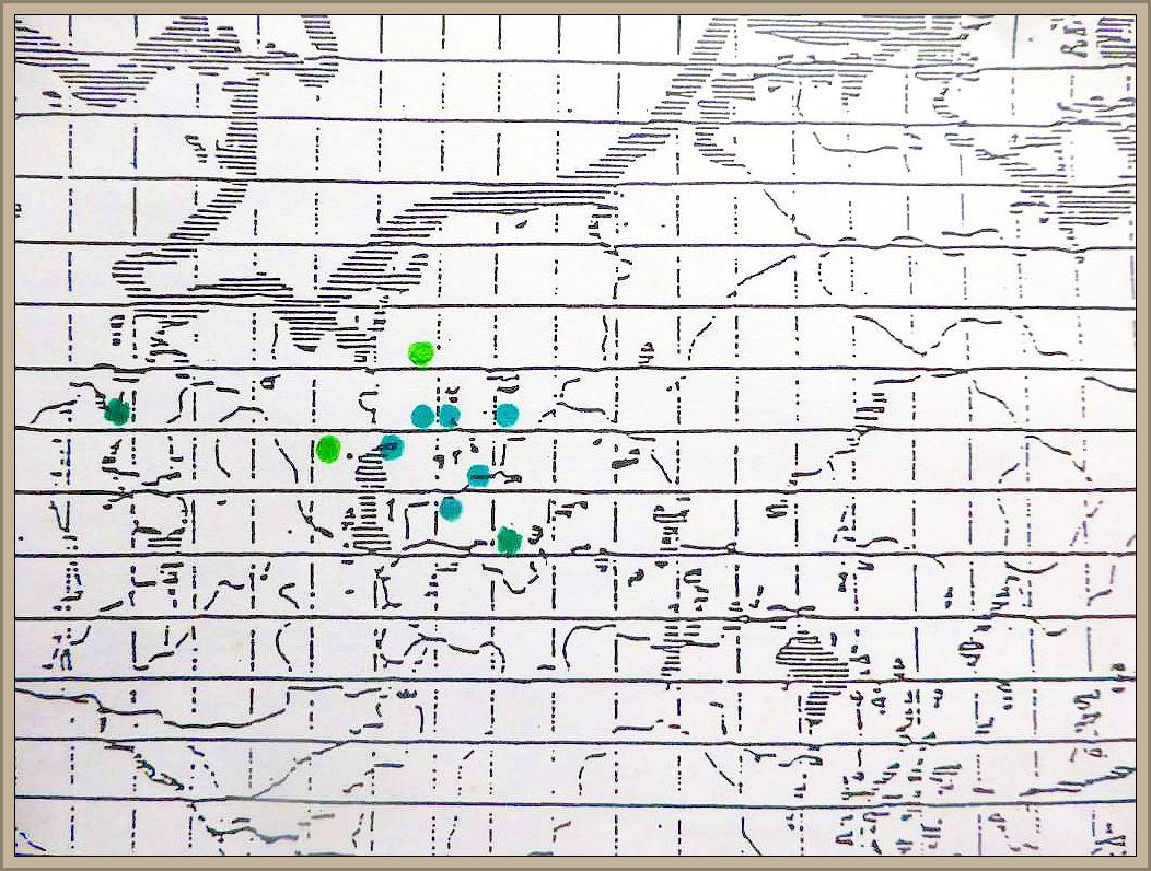 Cortinarius armillatus (A. & S.) Fr.- Geschmückter Gürtelfuß