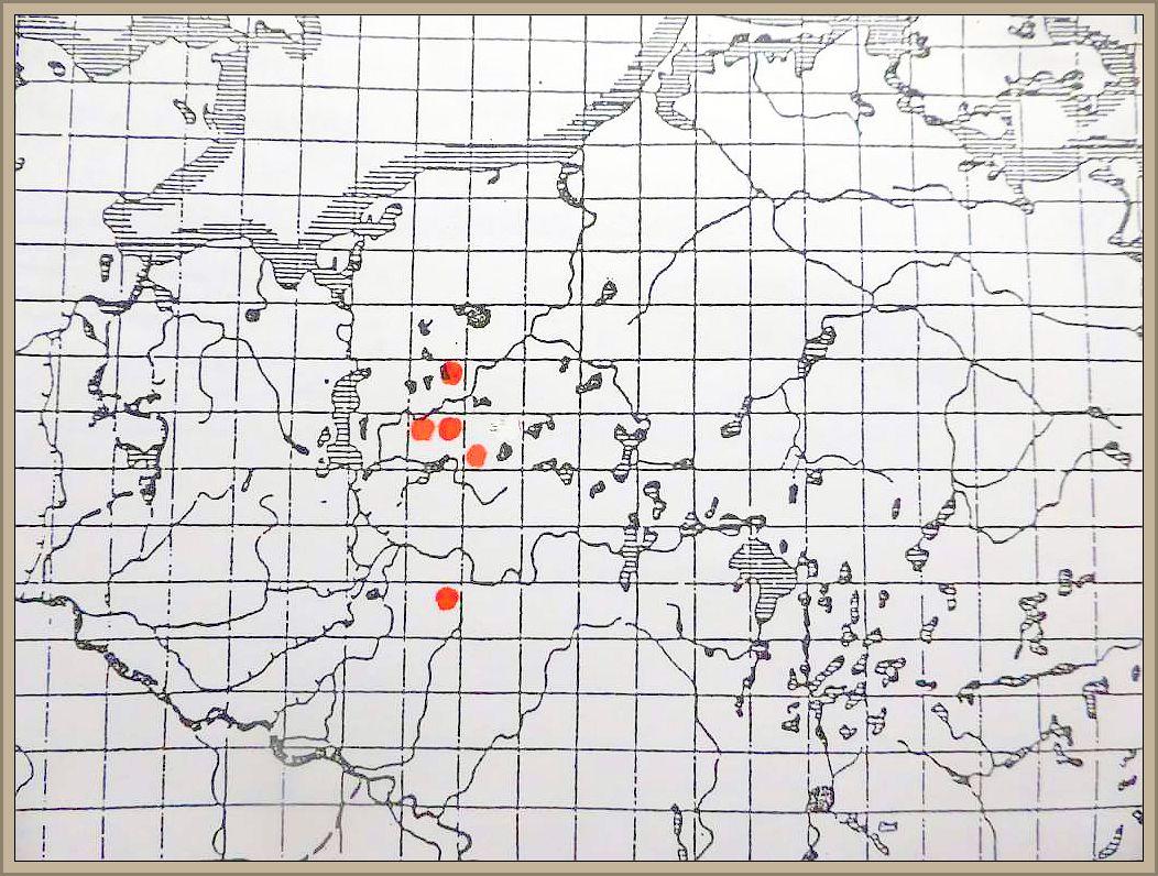 Cortinarius collinitus (Sow.) Fr. - Blaustiel - Schleimfuß