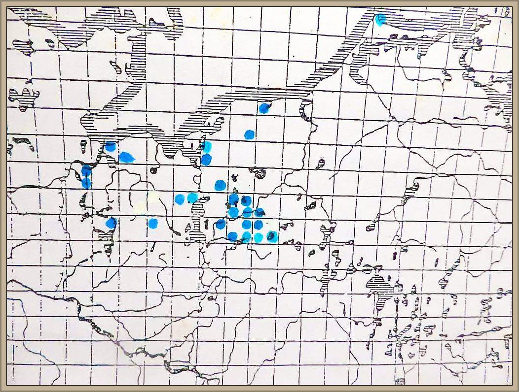 Cortinarius cinnamomeoluteus Orton - Gelbblättriger Hautkopf