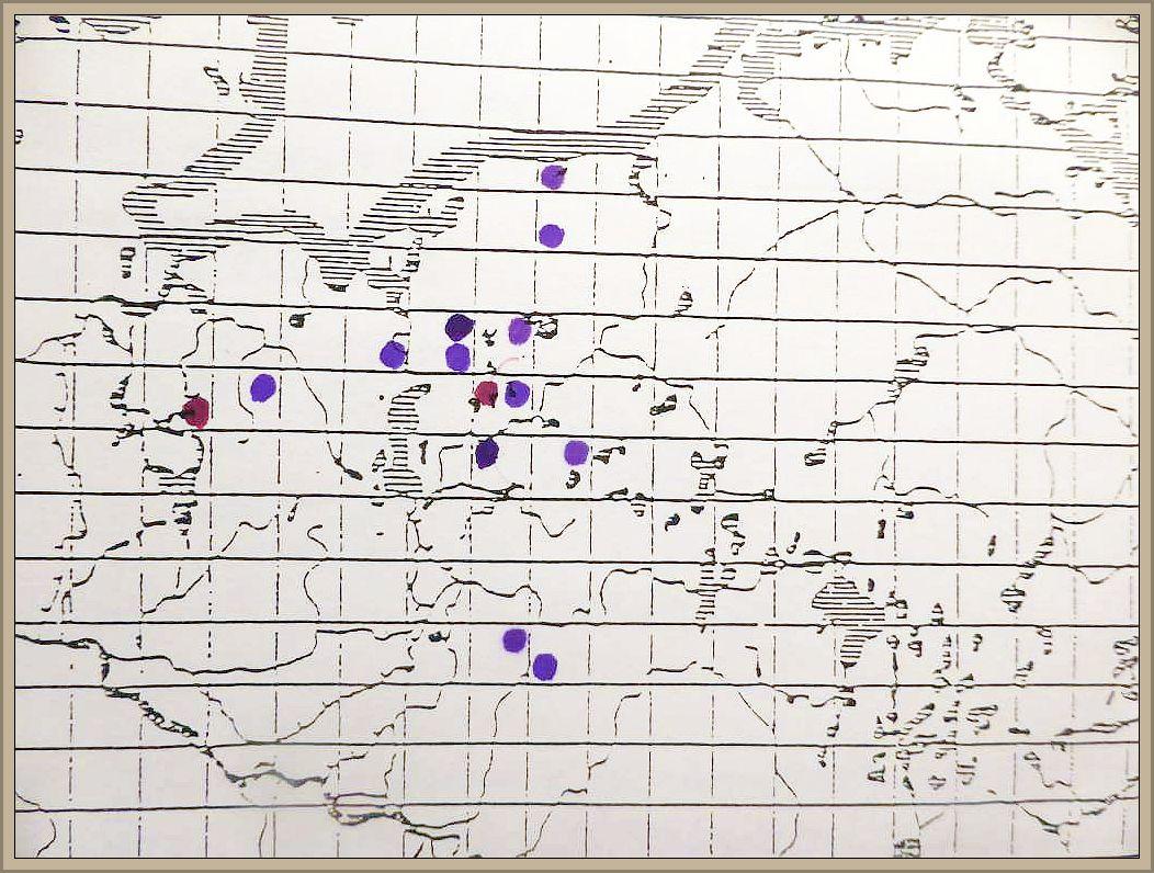 Cortinarius delibutus Fr. - Lilablättriger Schleimfuß