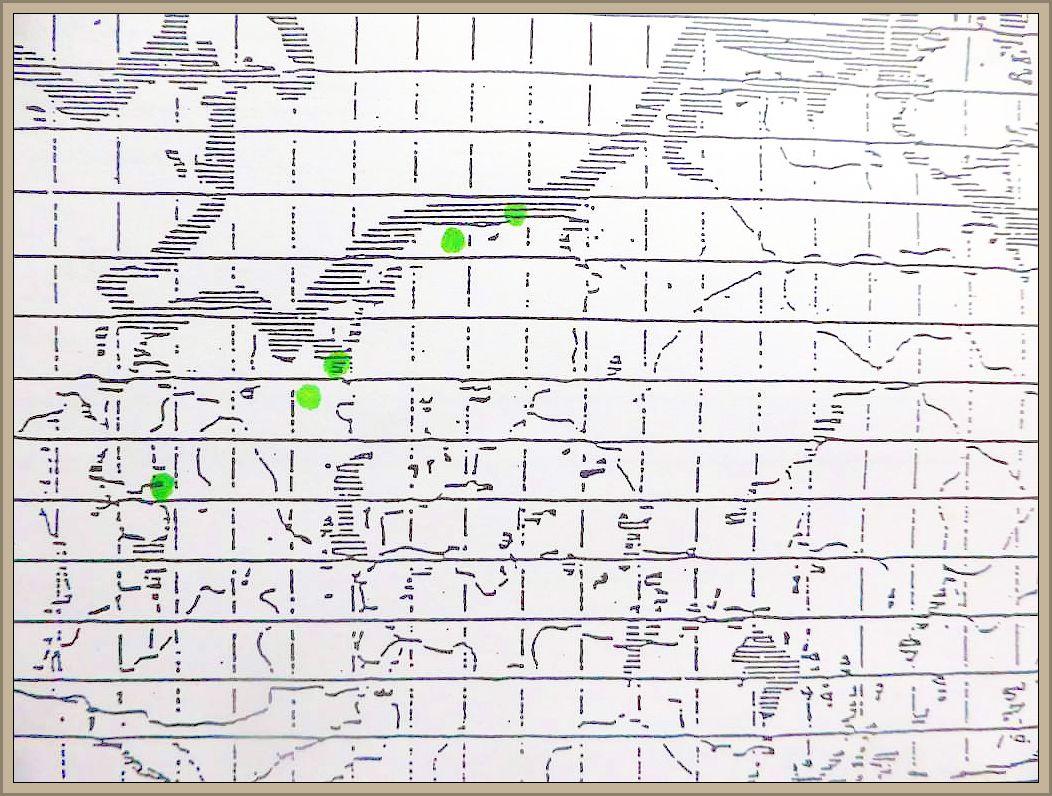 Cortinarius duracinus Fr. - Spindelstieliger Wasserkopf