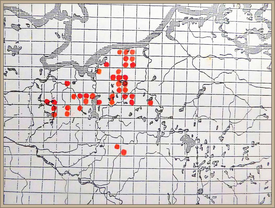 Cortinarius elatior Fr. - Langstieliger Schleimfuß