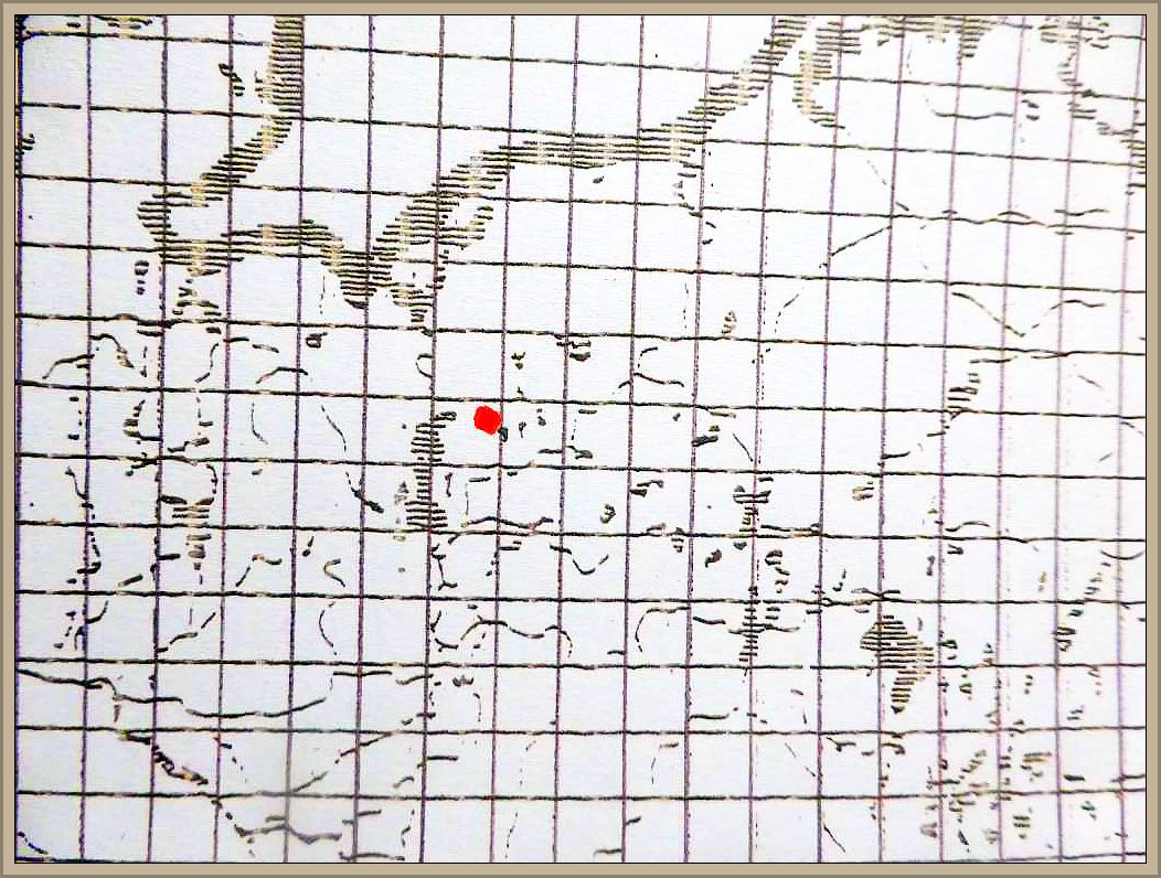 Cortinarius langei Rob. Henry - Velumgelber Klumpfuß