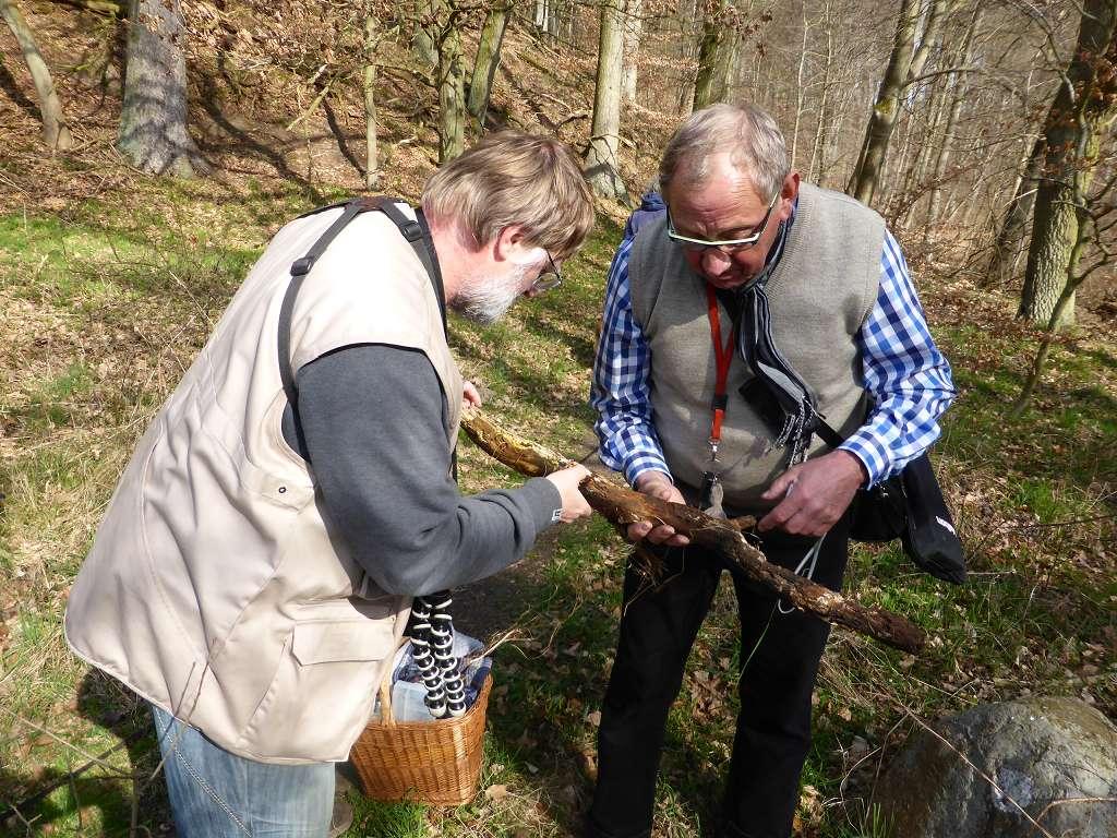 Christopher Engelhardt und Klaus Warning aus Bützow haben wieder etwas pilziges an einem Knüppel entdeckt.