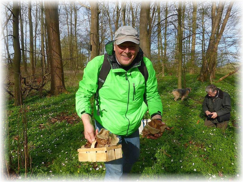 Jürgen aus Schleswig - Holstein hat allen Grund zur Freude. Er hat diese Oase entdeckt und sein mitgebrachter Korb kann längst nicht mehr alle Pilze fassen. Da hat sich der etwas längere Anfahrtsweg auf jeden Fall gelohnt. In weingen Tagen will er den Düsseldorfer Bereich auf der Suche nach Morcheln unsicher machen.