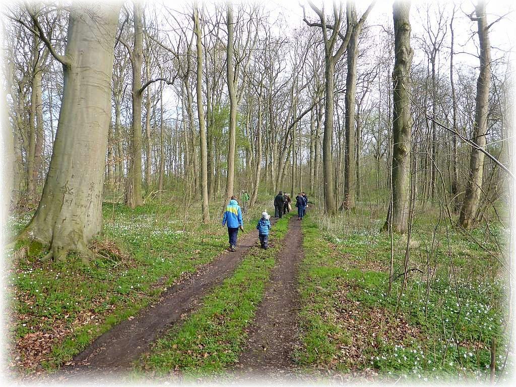 Und weiter führt uns der Weg durch den Tarnewitzer Urwald.