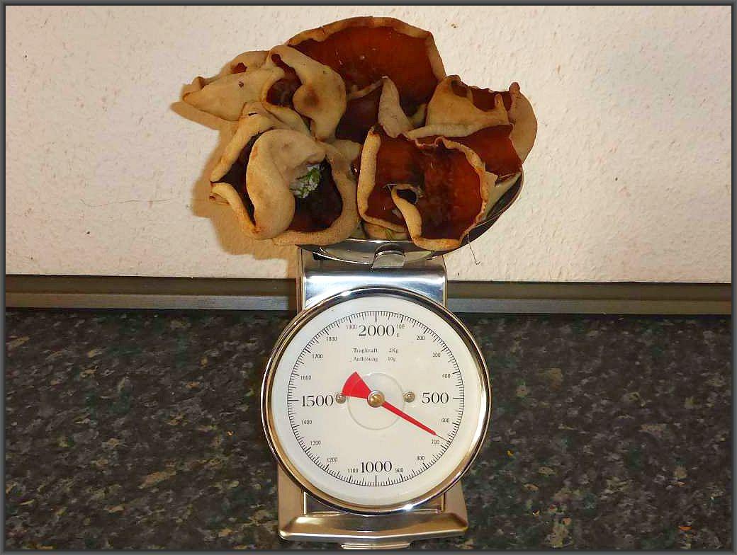670 g köstliche Morchelbecherlinge waren es heute im Zierower Grund. Eigentlich eine gute Pilzmahlzeit, aber ich denke, ich werde einen Teil trocknen und den anderen zur Pilzausstellung nutzen.