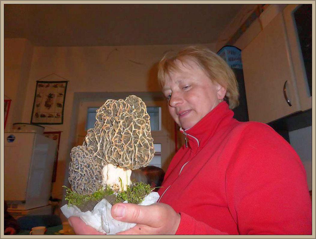Die Stars des heutigen Abends waren aber diese prachtvollen Speisemorcheln, die Irena heute zufällig in Sternberg gefunden hat. Selten haben wir so eine Morchelpracht bewundern können.