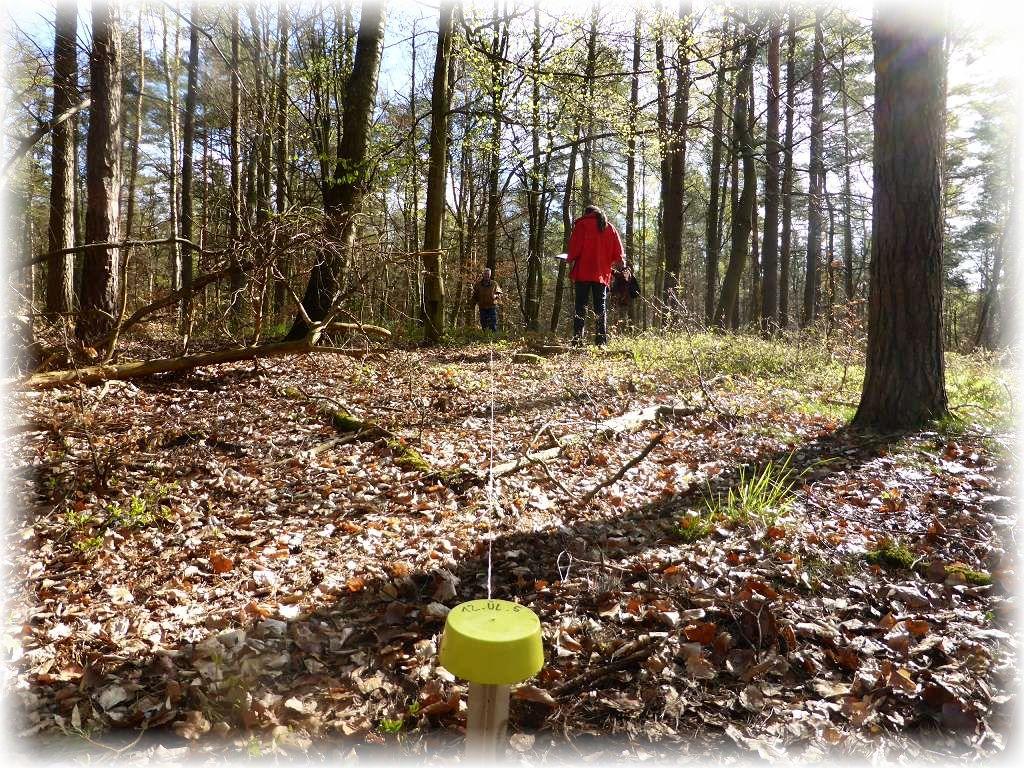 Mit einem vorprogramiertem Navigationsgerät muss zunächst ein Pflog mit gelber Kennzeichnung und entsprechender Nummerierung im Waldgebiet gesucht und gefunden werden. Dann muss mit einer Schnurr oder Bandmaß ein Radius von 27,8 m gezogen werden. Nur in diesem Radius darf Kartiert werden und das nicht länger als 45 Minuten. 16 deratige Punkte müssen bei Prora untersucht werden und etliche folgen in kürze noch in der Ueckermünder Heide und im Kaarzer Holz.chsten