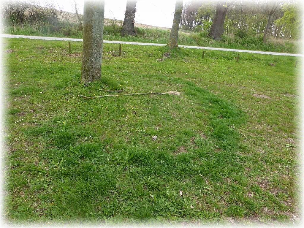 Gleich zu Beginn, auf der Rasenfläche am Parkplatz, viel uns dieser kreisförmige Streifen mit besonders üppig wachsender Gräser auf. Pilze sind dafür verantwortlich. Maipilze oder Nelkenschwindlinge verraten so auch ihre Plätze, ohne Anwesenheit von Fruchtkörpern.