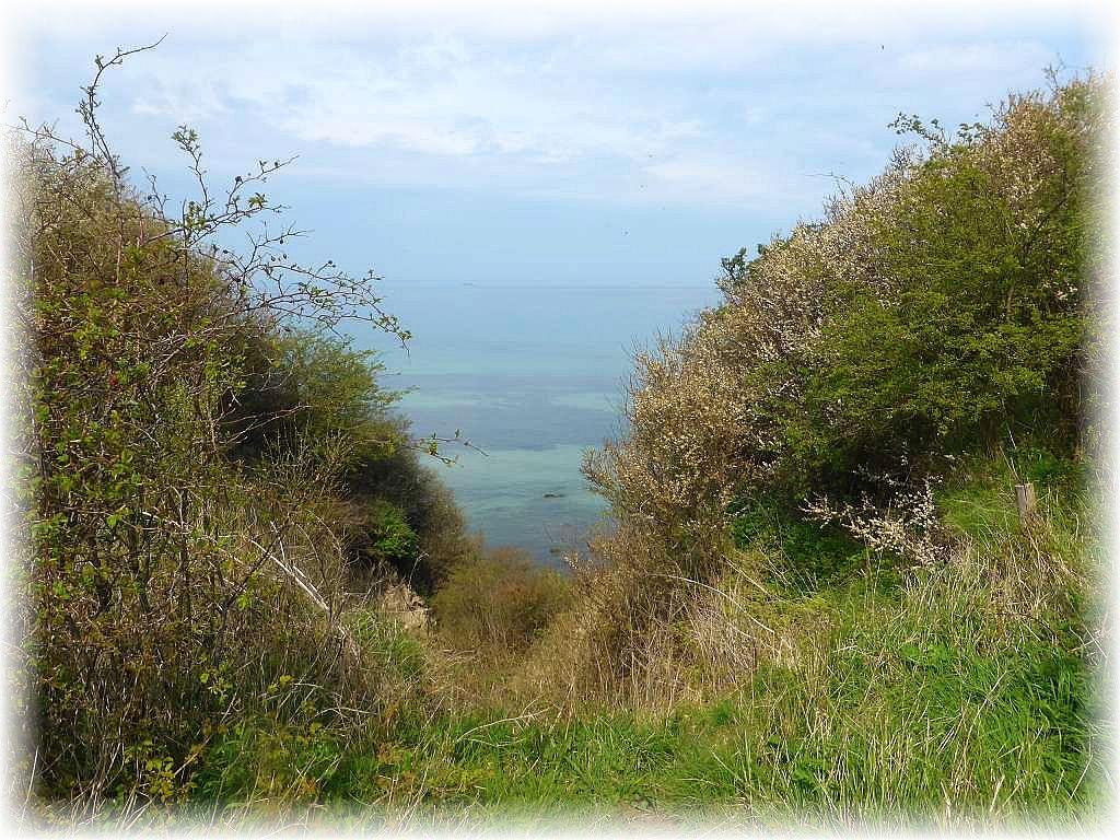 An frischer Ostseeluft führte uns unsere heutige Pilzwanderung direkt in Küstennähe von Brook bis Steinbeck.