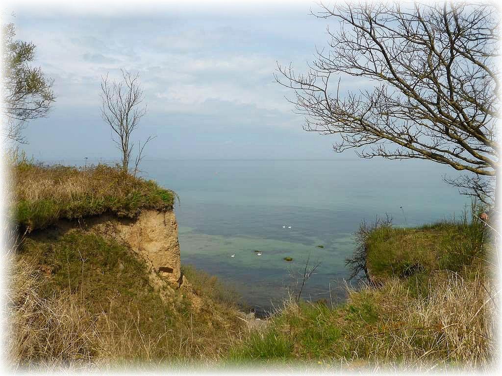 Ein Blick die Steilküste hinnunter auf das türkisschimmernde Ostseewasser. Leider ist es heute etwas dunstig.