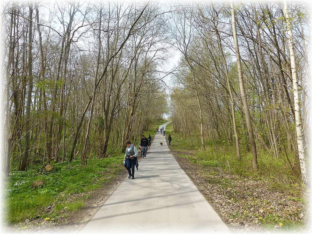 Weiter geht es den Rad- und Wanderweg entlang. Er wird immer wieder von Morcheln und anderen Pilzen gesäumt. In erster Linie sind es nun Käppchen - Morcheln.