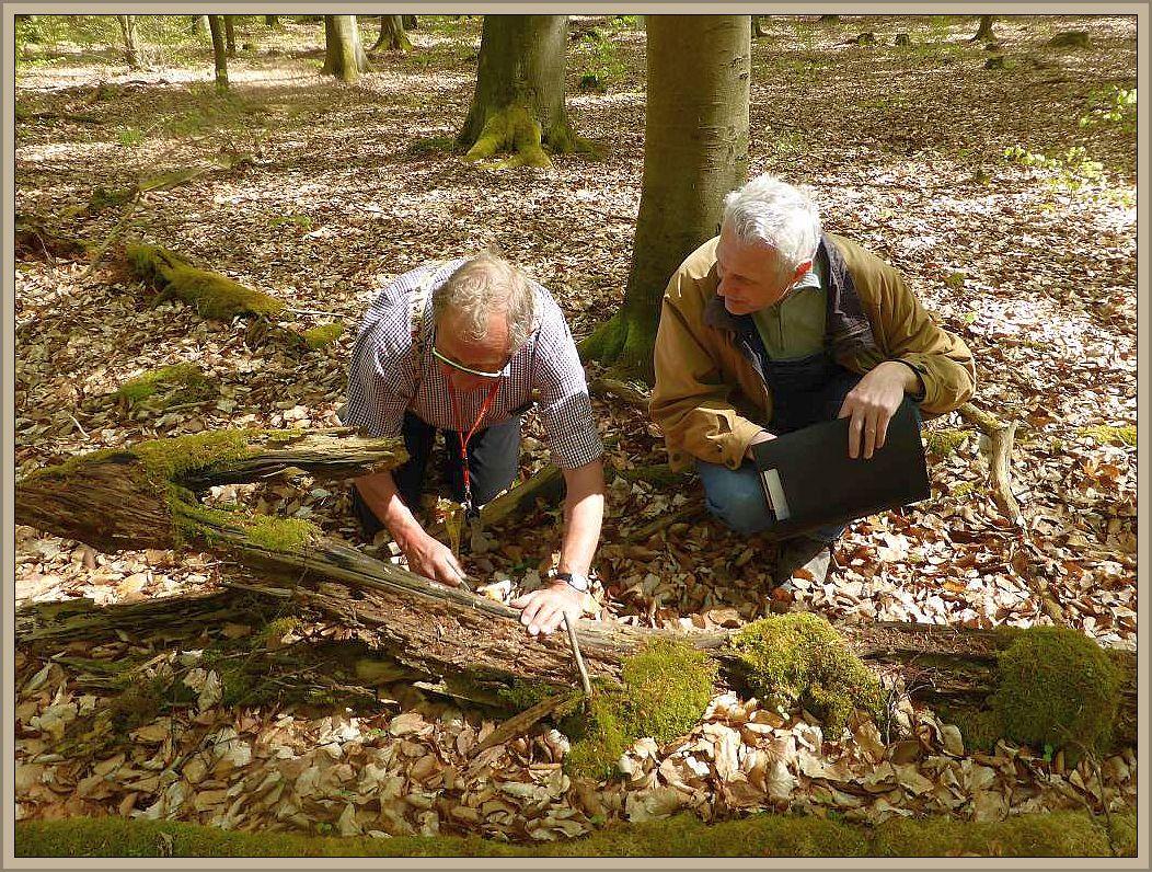 Klaus Warning und Benno Westphal am 04.05.2016 bei Kartierungsarbeiten im Kaarzer Holz. Insbesondere Totholz ist zu dieser Jahreszeit von Interesse und beherbergt eine Vielzahl von saprophytischen Pilzarten.