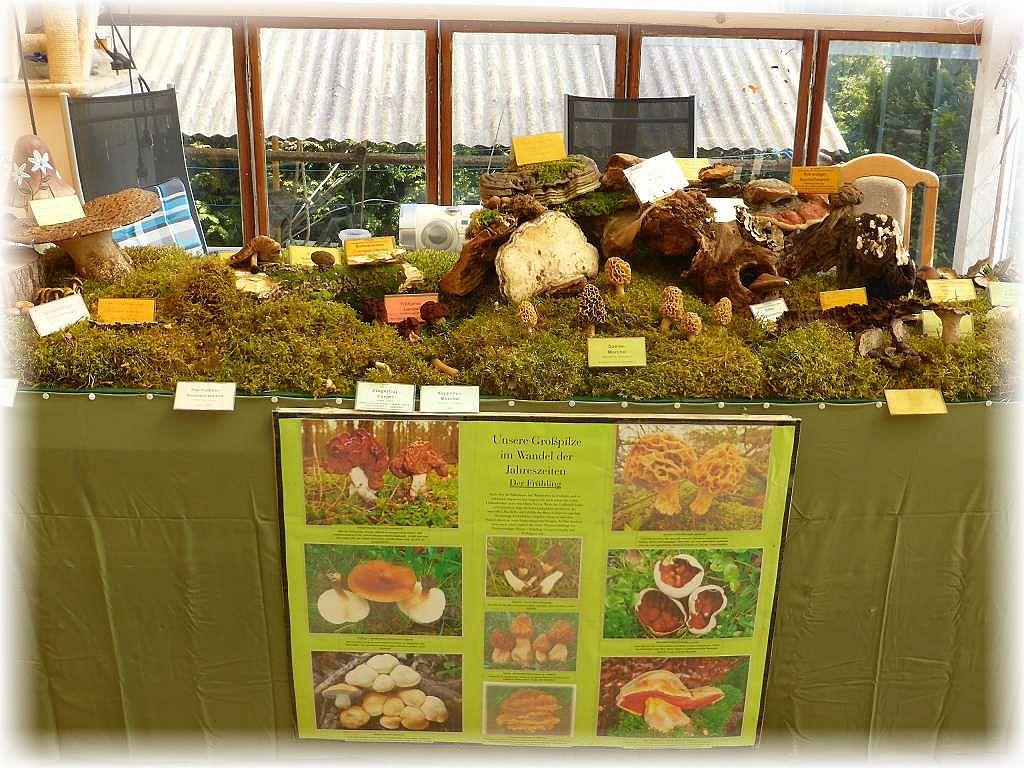 Zur Einstimmung auf unser Pilzwochenende hatte wir schon eine kleine Pilzausstellung vorbereitet.
