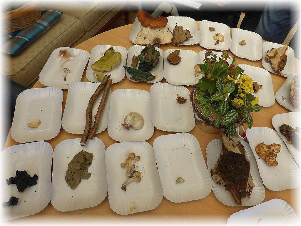 Aud Papptellern wurden die Funde der ersten Exkursion ausgelegt und sortiert.