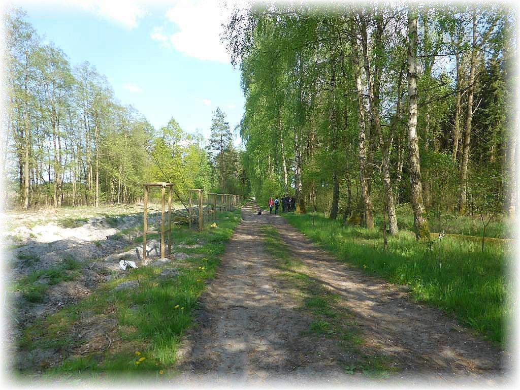 An den auf der rechten Seite des Waldweges noch stehenden, alten Birken, erregten kanz besondere Pilze das Interesse der Teilnehmer.