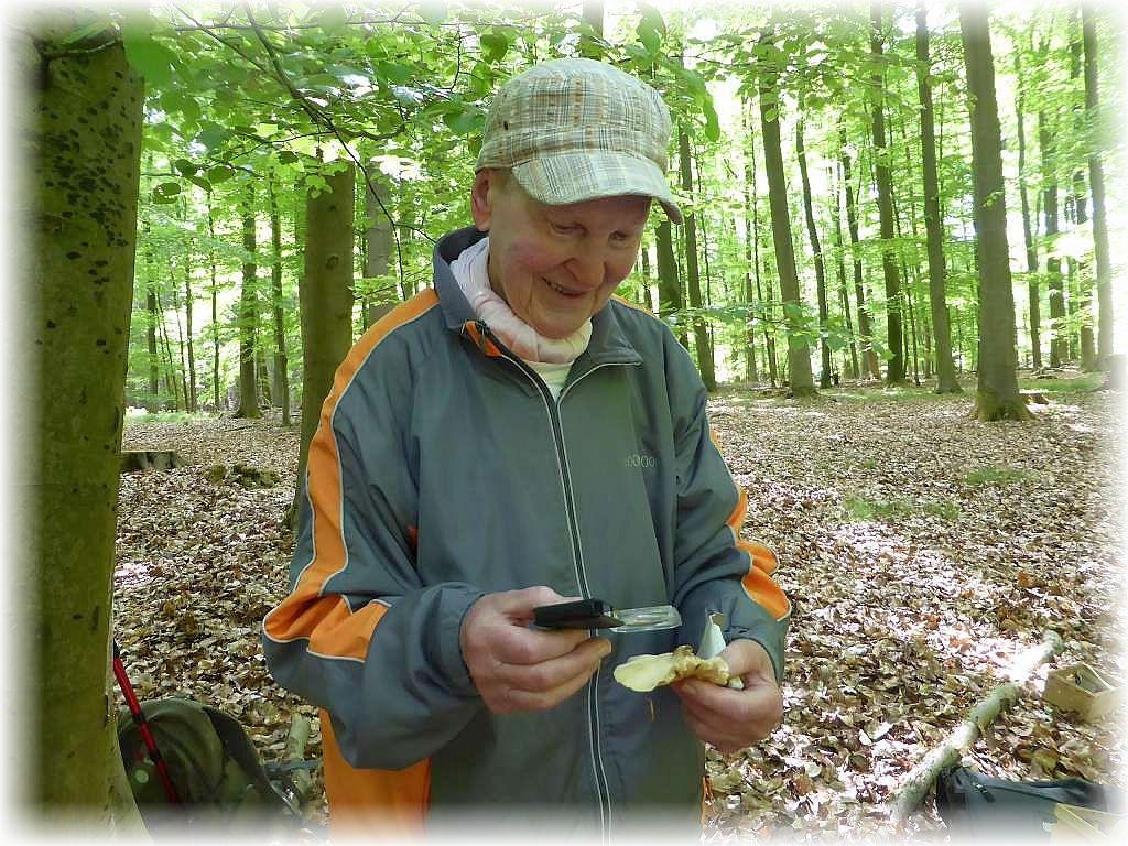 Wie der Gattungsnahme schon vermuten läßt, dürften die Lamellenschneiden der Sägeblättlinge etwas an ein Sägeblatt erinnern, was Pilzfreundin Helga Köster mit einem Blick durch die Lupe auch bestätigen konnte.