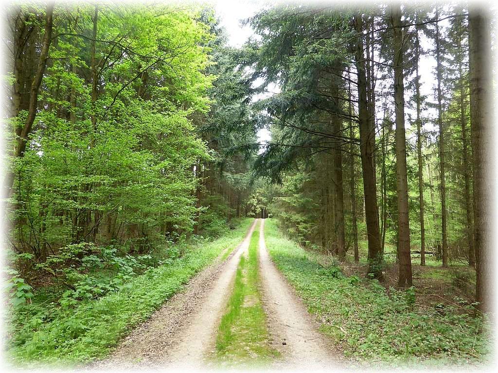 Der Botelsdorfer Wald im Frühling 2016.