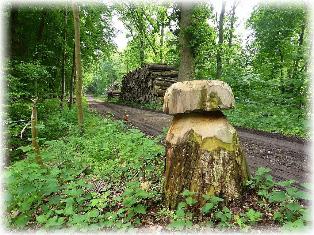 Noch mal zu den Redentiner Tannen. Ein kreativer Forstarbeiter hat aus diesem alten Eichenstubben der früheren Steinpilz - Schwämme in diesem Wald ein Denkmal am Wegesrand gesetzt. Es handelt sich offensichtlich um den Riesenröhrling (Boletus colossus).