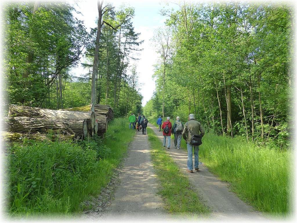 Start bei bestem Wetter durch den frischen Laubwald.