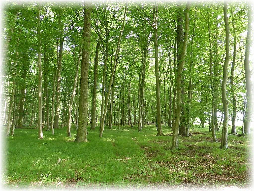 Bei sonnigen und angenehm warmen Frühlingswetter wnderten wir heute auf der Suche nach Pilzen durch einen abwechlungsreichen Laubwald, bei Bad Doberan, dem Walkmüller Holz.