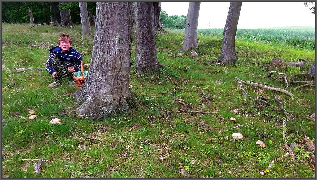Jonas dieser Tage voller Freude beim Sammeln von Sommersteinpilzen. Mitunter ist er etwas gefrustet, wenn es heißt wie gehen in die Pilze, gibt es aber etwas zu Erten, dann ist er nicht mehr zu halten.