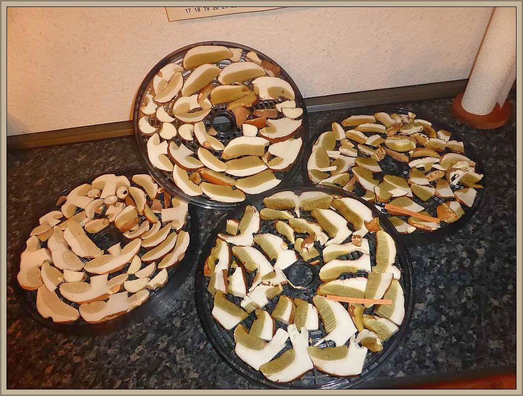 Der Madenverschnitt bei meiner gestrigen Steinpilz - Ernte hielt sich in Grenzen. Meist waren die Pilze nur im Stielbereich mehr oder weniger vermadet. Diese und vier weitere Siebe sind nun getrocknet und nun fogt der Rest vom Schützenfest, der im Kühlschrank Platz gefunden hatte.