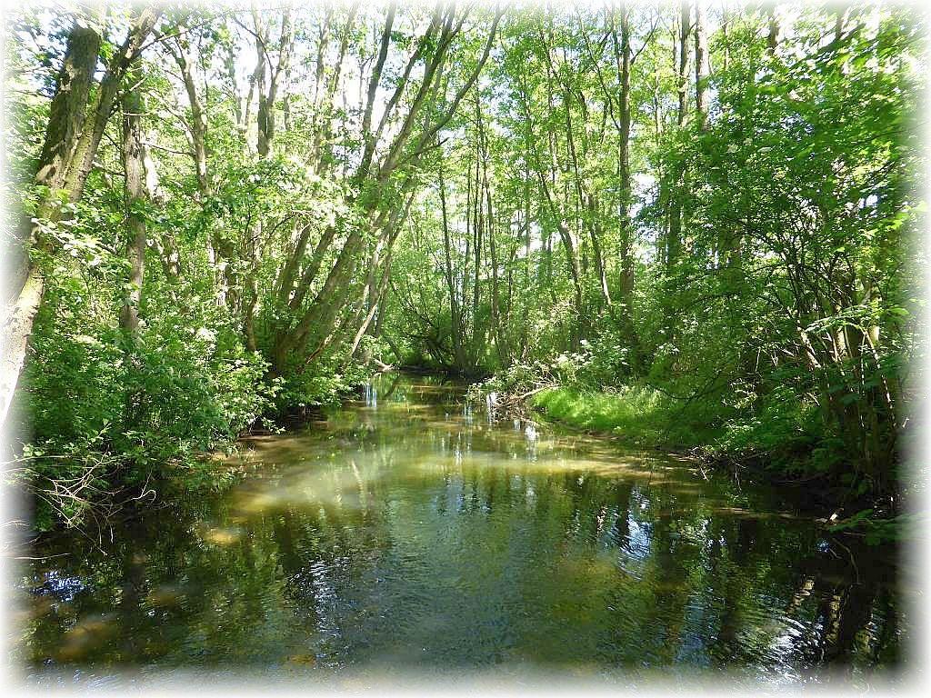 Der Wallensteingareben, hier im Moidentiner Forst, ist vor Jahrhunderten ursprüglich als schiffbare Wasserstraße zwischen Schwerin und Wismar angelegt worden. Heute ist er größtenteils ein naturbelassenes Flüßchen und schlängelt sich durch Wald und Flur vom Schweriner See bis zur Ostsee.