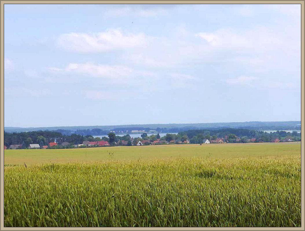 Wir blicken von hier aus über das Getreidefeld hinweg auf die Otschaft Barnin, dem gleichnamigen See und die ausgedehnten Wälder der Umgebung.