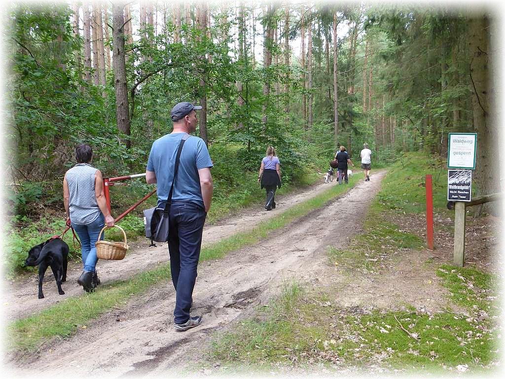 Dann ging es sogleich erwartungsvoll in den abwechslungsreichen Wald.