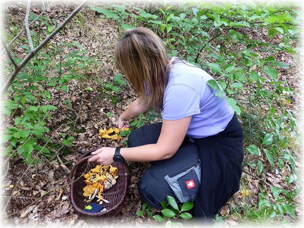 Und schon wieder eine ergiebige Stelle mit Pfifferlingen, dieses mal im Laubwald.