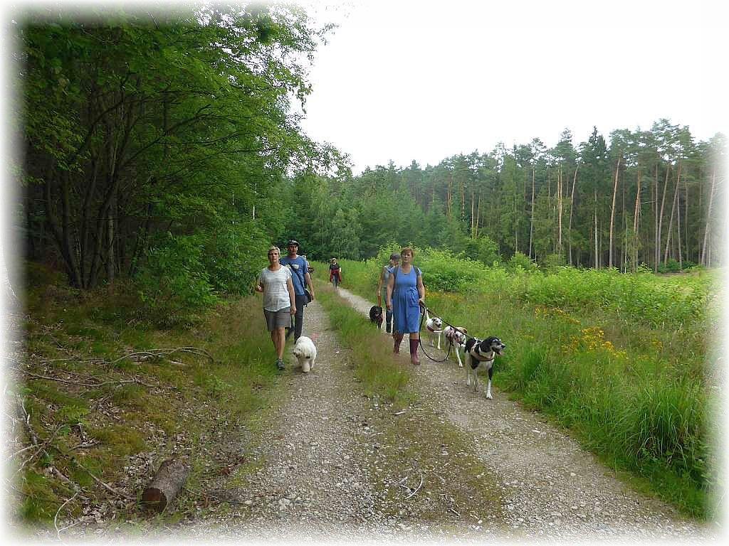 Die Wanderung neigt sich langsam dem Ende zu und ich denke, auch für die gut ausgebildeten Hunde, zumindest in punkto Benehmen, war es heute ein kleines Abenteuer.