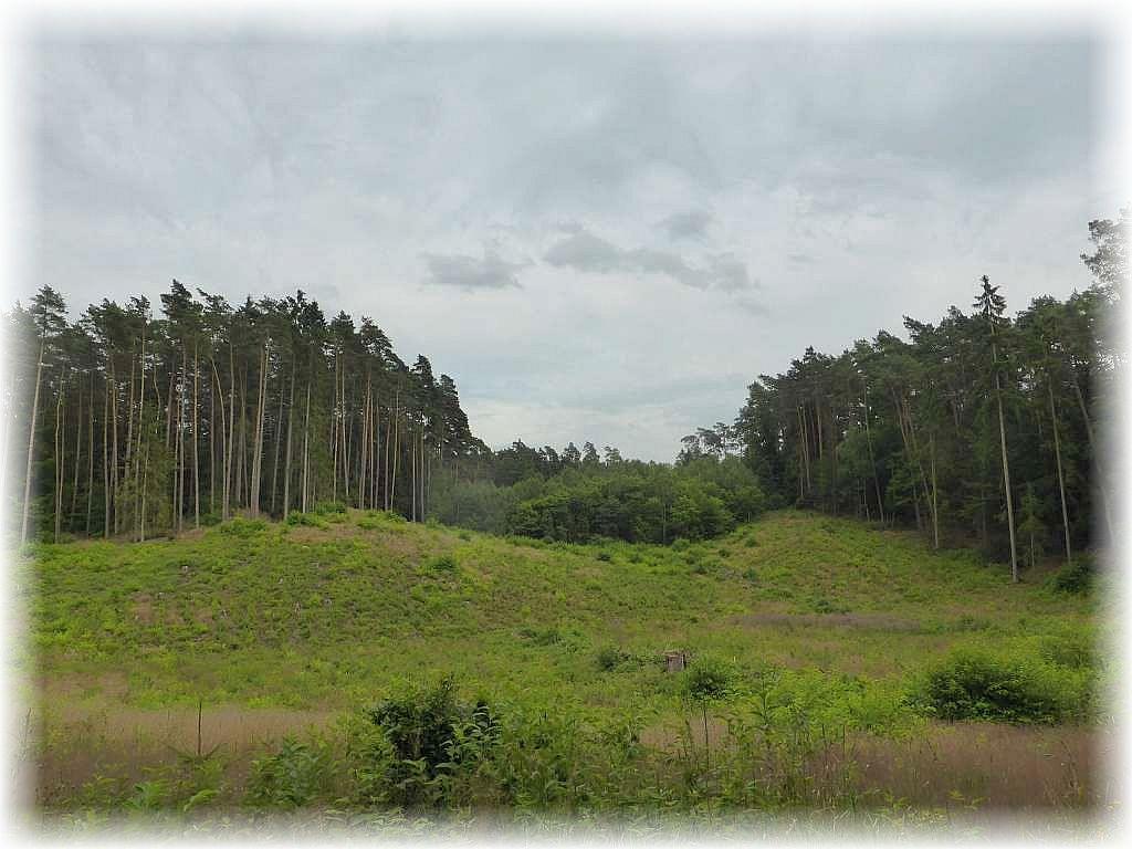 In den hügeligen Wäldern bei Weberin war ich mit Leuten der DOGS - Hundetraing zu einer Pilzwanderung unterwegs.