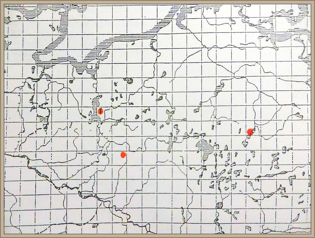 Cortinarius trivialis Lge. - Natternstieliger Schleimfuß