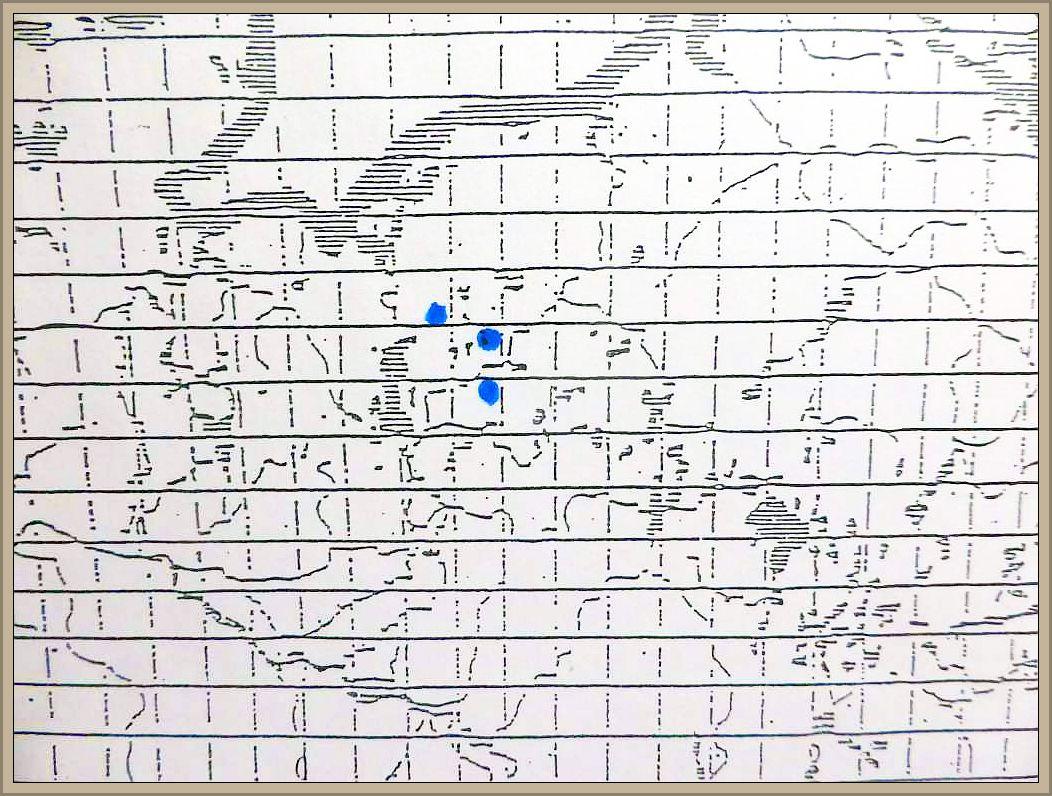Cortinarius uliginosus (Der.) Berk. - Kupferroter Moor - Hautkopf