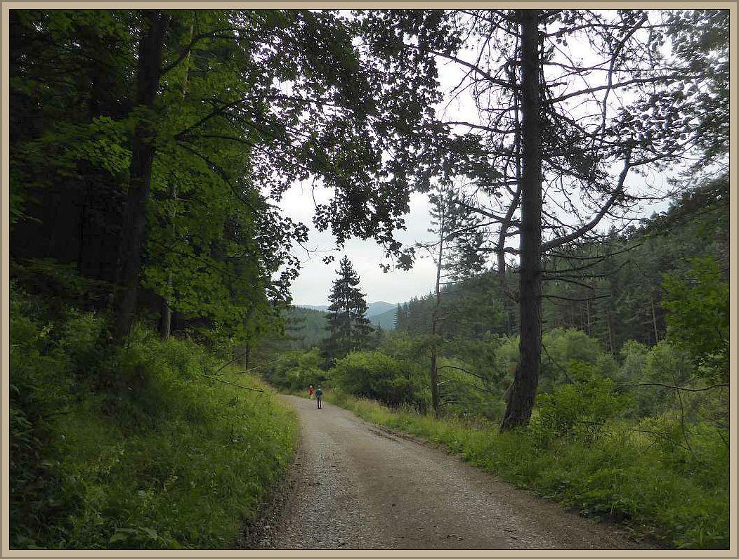 Ein wunderbare Berglandschaft finden wir hier vor. Die Berge gehören zu den Karpaten. Wer schnell mal links oder rechts im Wald nach Pilzen ausschauen möchte hat es nicht leicht. Entweder geht es steil abwärts oder aufwärts - ein anstrengendes Geschäft für uns Flachländer.
