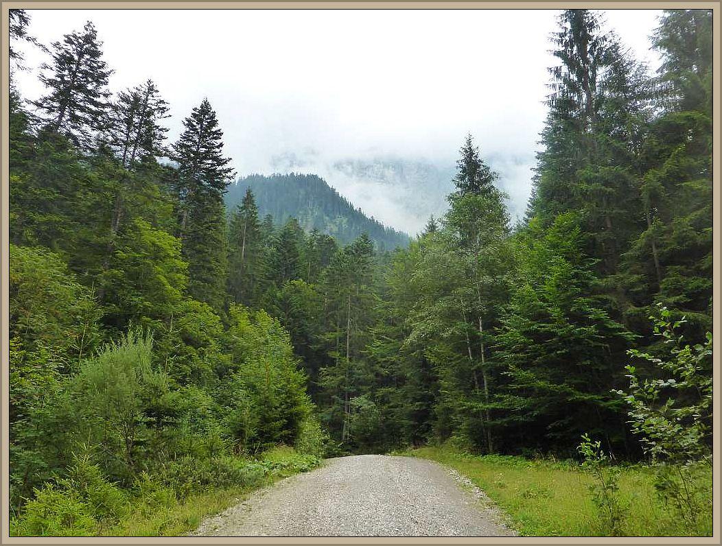 Ein auf und ab, so ist das Pilzwandern in den Bergen. Es verlangt uns Flachländern schon einiges an Kondition ab. Dafür wird ma aber immer wieder mit grandiosen Perspektiven belohnt.