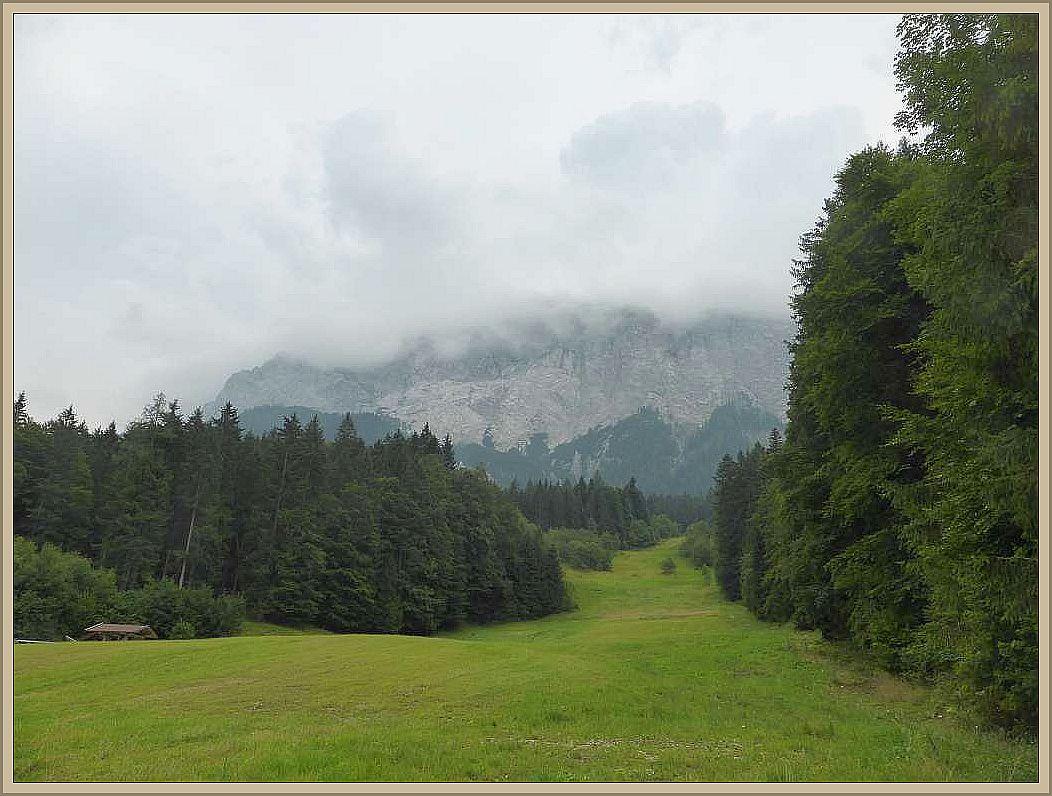 Diese Fichten- und Tannen am Fuße des Zugspitz - Massivs waren mein Zielgebiet.