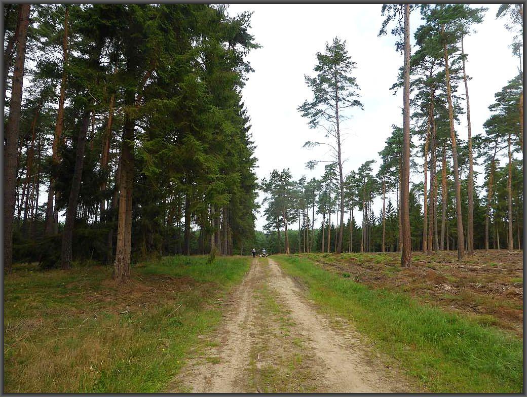 Weiter führt uns der Weg durch die sandigen Heidewälder.