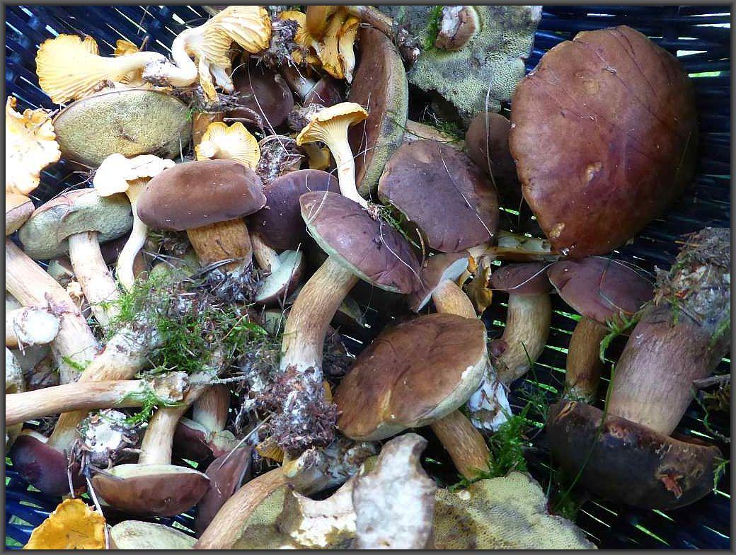 Für den einen oder anderen Pilzfreund war das Abendbrot gesichert.