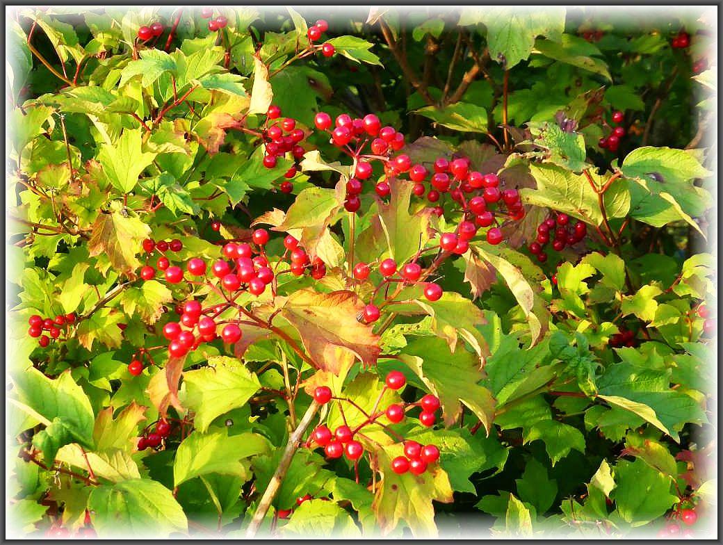Die Sommersonne hat inzwischen auch viele weitere Früchte zur Reifung gebracht, die farbenfroh in der Abendsonne leuchteten.