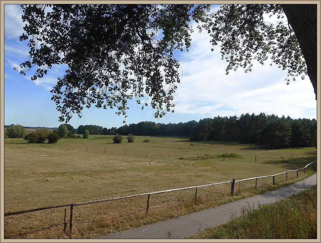 Gebietsweise, so wie hier bei Stove, startet der September viel zu trocken. Das Gras der Viehweide ist verdorrt. Im Hintergrund der Waldzipfel meiner gestrigen Kartierungsaktion.