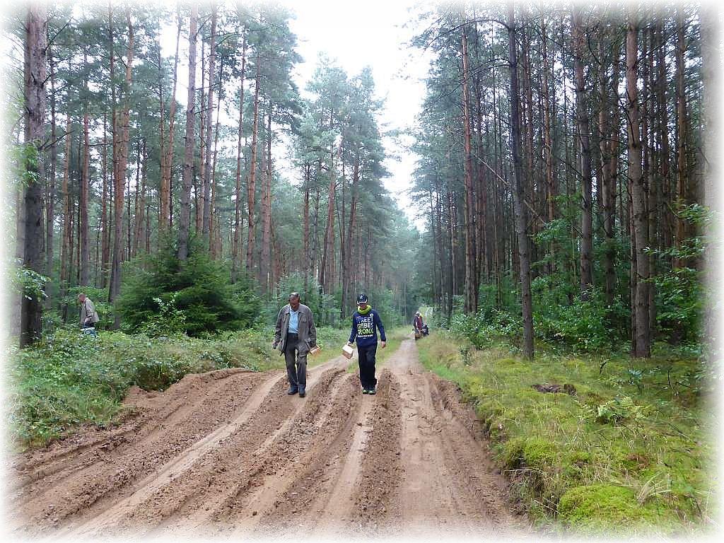 Auf gehts durch den sandigen Nadelwald der Kobander Tannen.