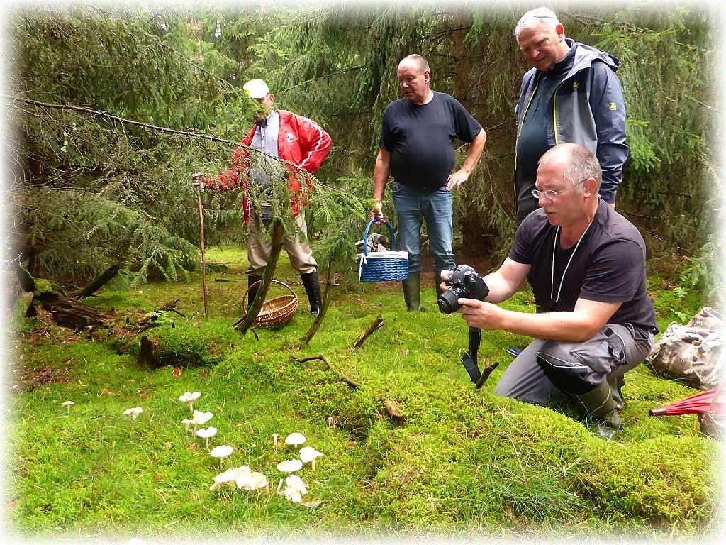 Im dichten Moos etwas verstäkt in einer Fichten - Ecke begeisterte uns im fast pilzleren Wald eine Gruppe von ungenießbaren Gefleckten Rüblingen. Der Anblick ist selbst dem Vorsitzenden des Rehnaer Pilzvereins, Torsten Richter, ein Foto wert.