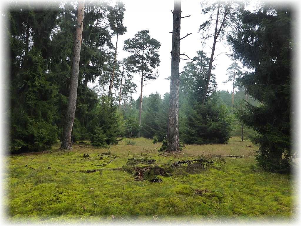 Wir befinden uns ja auch in einem märchenhaft schönen Gebiet, dass bis zur Wendezeit militärisches Sperrgebiet war. Gerade diese Flächen sind besonders wertvoll, blieben sie doch über jahrzehnt von forstlicher Aktivität größtenteils verschont. Große Flächen sind deshalb auch in den Besitz der Deutschen Bundesstiftung Umwelt überführt worden, um sie längerfristig als Naturschutzgebiete zu sichern, deshalb auch unser Kartierungsprojekt, zu dem auch Flächen in diesem Wald gehören.