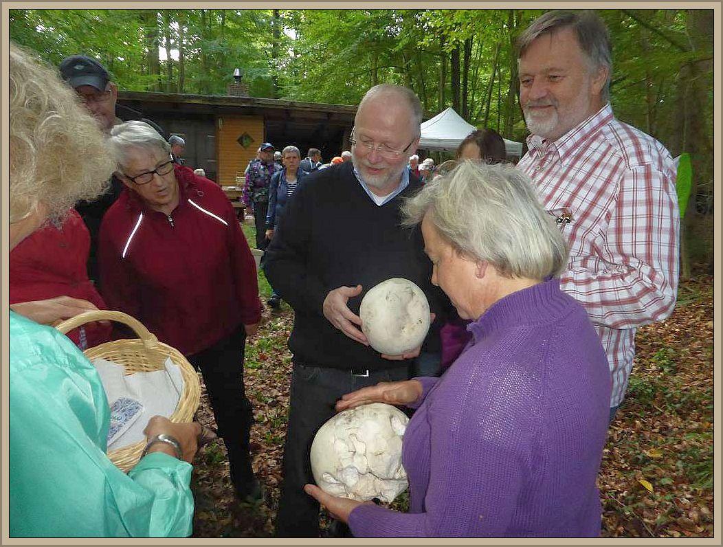 Bereits gestern erregte Irena im Schleswig - Holsteinischen Ritzerau mit den großen, weißen Kugeln aufmerksamkeit.