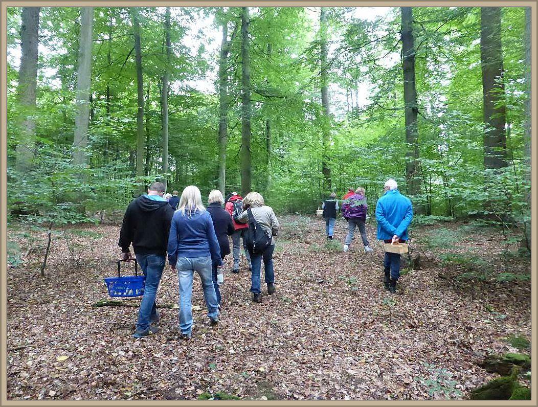 Und los geht es zu einer knapp dreistündigen Tour durch den Buchenwald, der in diesem Jahr leider nicht viel zu bieten hatte.
