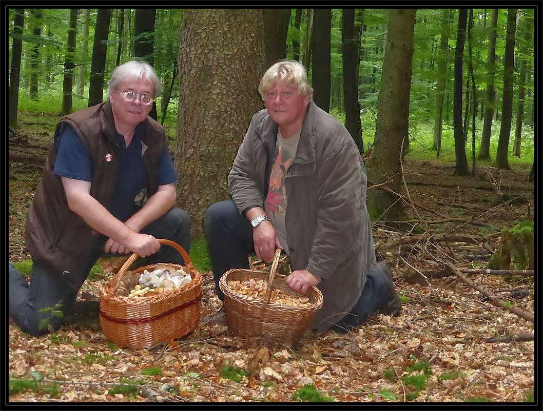 So war ich mit unserem Berliner Pilzfreund Egon, der gerade Urlaub in Boltenhagen machte, bis in den Sachsenwald bei Hamburg gefahren, da es hier etwas mehr gergnet hatte, so dass sich unsere Körbe nicht nur mit zahlreichen Stockschwämmchen füllten.