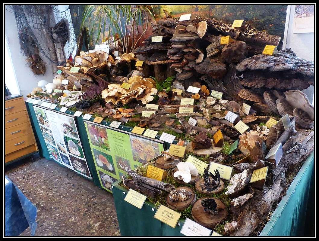 Der Holz-, Bauch- und Schlauchpilzbereich.